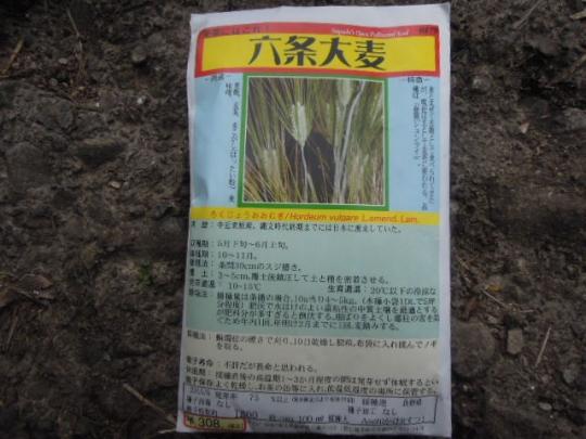 六条大麦 H2710