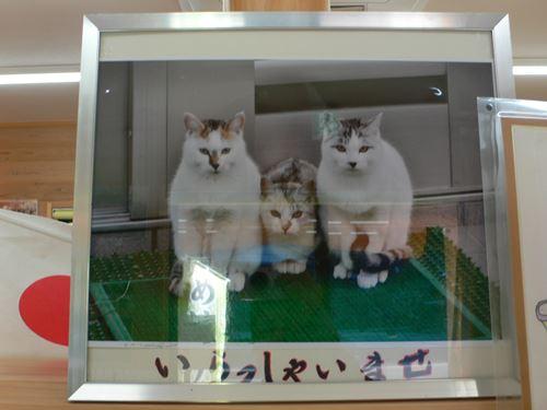 dorokyoukumanogawa1103012_R.jpg
