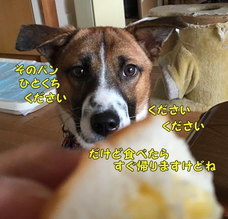 チャーくんとパン