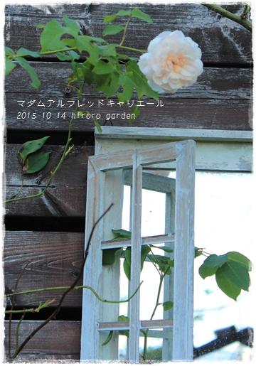 IMG_786011.jpg