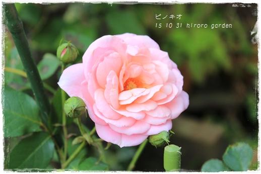 IMG_796911.jpg