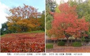 園内紅葉状況