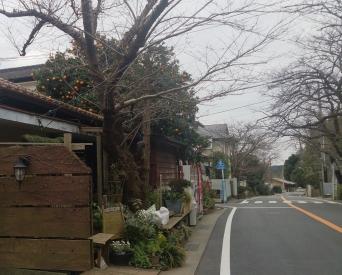 20160314桜どおり