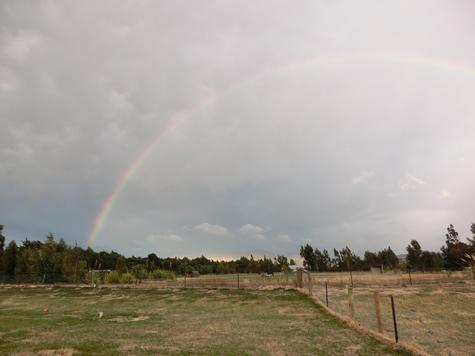 羊の国のラブラドール絵日記シニア!!「Over the rainbow」1