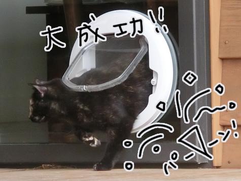 羊の国のラブラドール絵日記シニア!!「はじめてのキャット・ドア」5