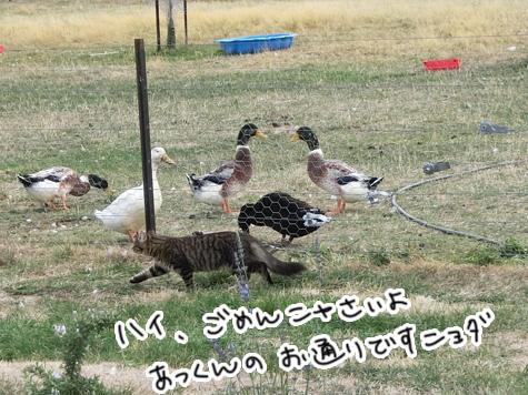 羊の国のラブラドール絵日記シニア!!「はじめてのキャット・ドア」7
