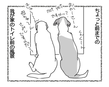 羊の国のラブラドール絵日記シニア!!「最近のトイレ前事情」1