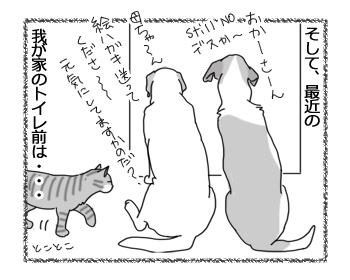 羊の国のラブラドール絵日記シニア!!「最近のトイレ前事情」2