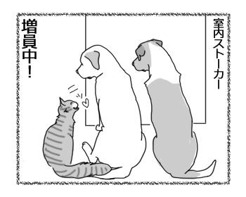 羊の国のラブラドール絵日記シニア!!「最近のトイレ前事情」4