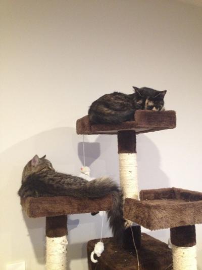 羊の国のラブラドール絵日記シニア!!「はじめての猫パンチ」5