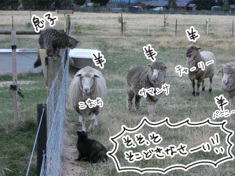羊の国のラブラドール絵日記シニア!!「ファームとテオ母さん」4