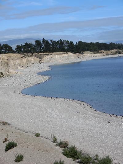 羊の国のラブラドール絵日記シニア!!「パラダイス・ダックのビーチ」1