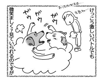 羊の国のラブラドール絵日記シニア!!「みんなのプレイバトル」2
