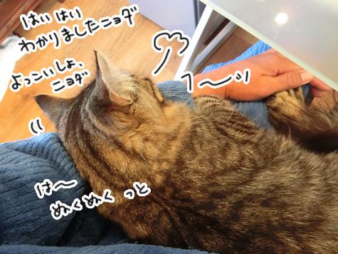 31032016_cat2.jpg