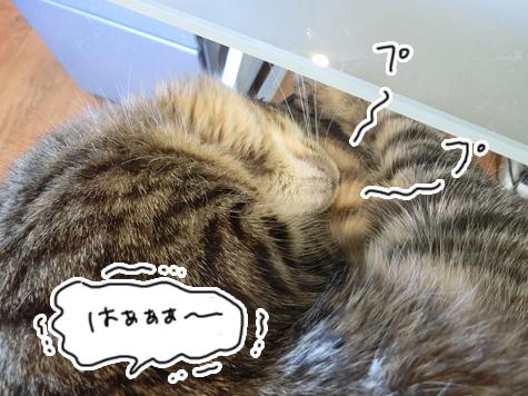 31032016_cat5.jpg