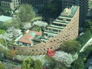スウェーデン大使館と櫻