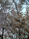 16-03-31_17-39.jpg