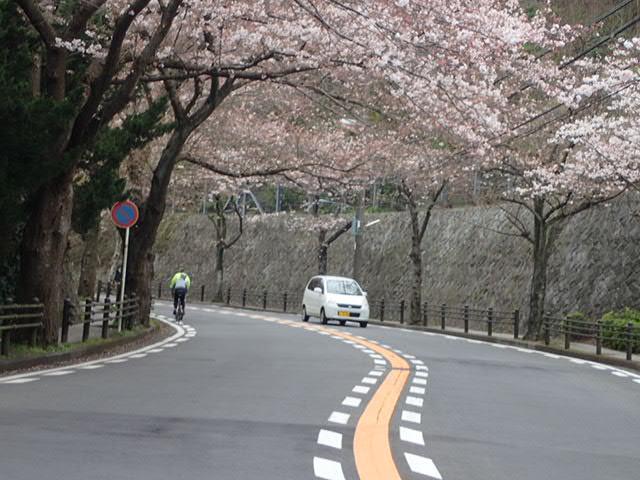 お花見サイクリング (1)