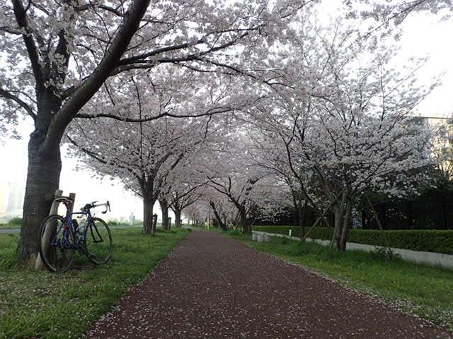 AMお花見サイクリング (2)