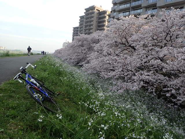 AMお花見サイクリング (6)