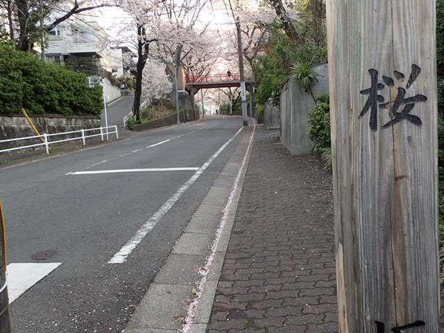 AMお花見サイクリング (9)