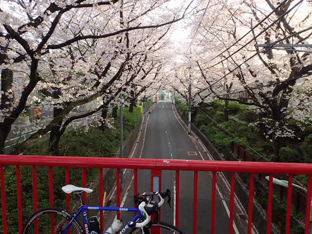 AMお花見サイクリング (8)