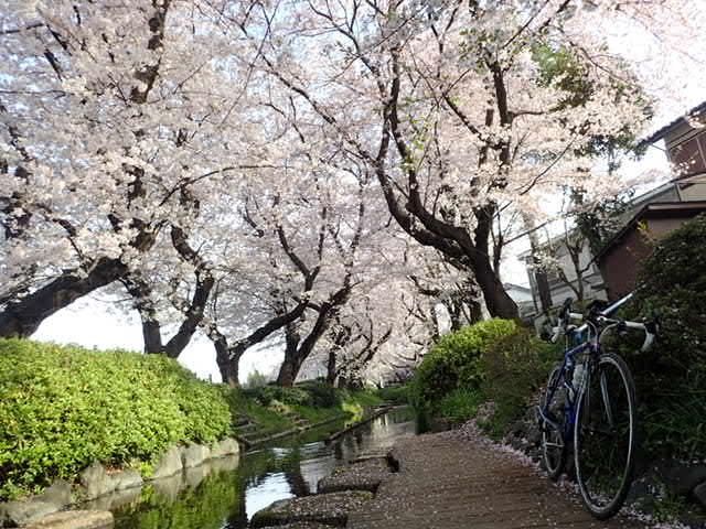 AMお花見サイクリング (12)