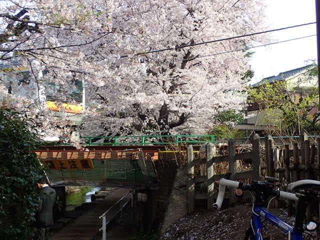 AMお花見サイクリング (14)