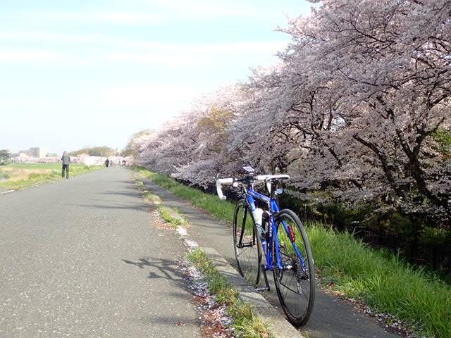 AMお花見サイクリング (16)