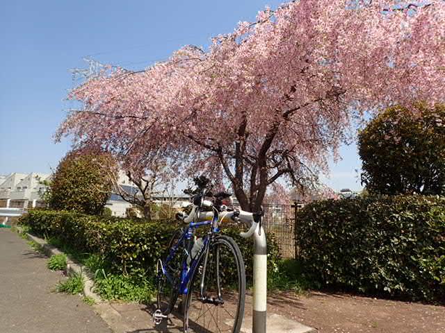 AMお花見サイクリング (21)