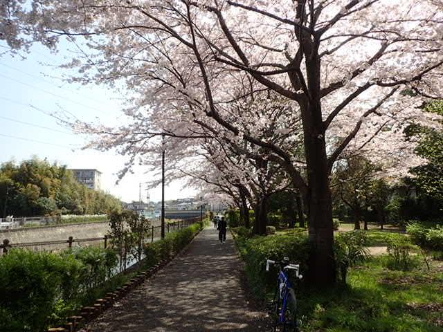 AMお花見サイクリング (25)