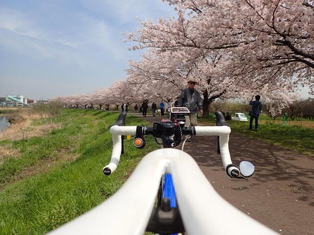 AMお花見サイクリング (28)
