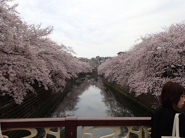 AMお花見サイクリング (33)