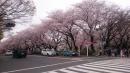 20160403名古屋城