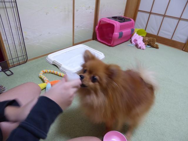 20151008ポンころゼリー③