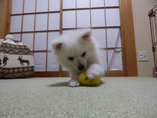 20151227ころんおもちゃ②