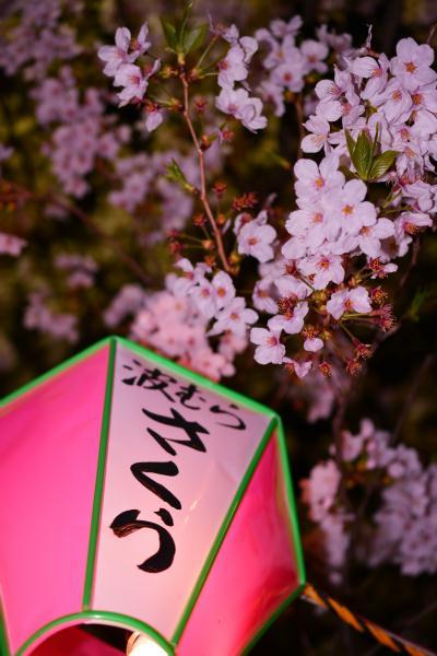 隅田公園の夜桜×スカイツリー
