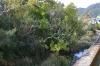 浮島の森1