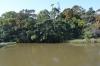 浮島の森4