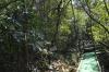 浮島の森3