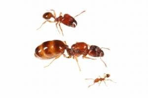 ant001___ant_contents_img4.jpg