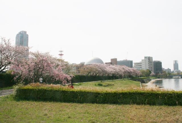 IMG_2994 太田川左岸(640x433)