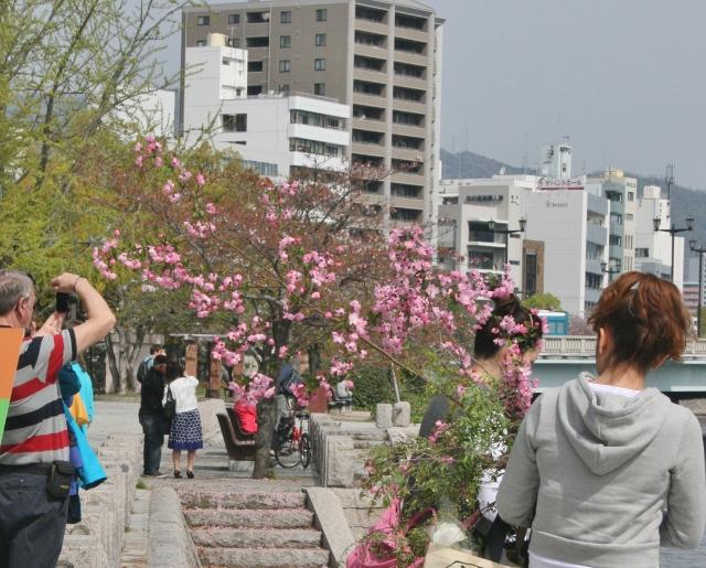 IMG_3018 花の枝(640x515)