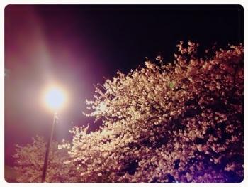 ヴェルニー公園 夜桜
