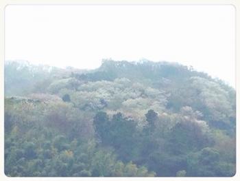 葉山の山2