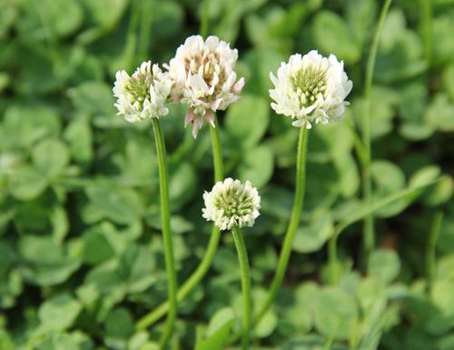 アクアドームの花