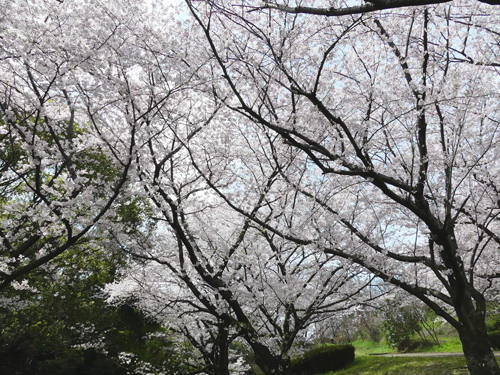 20160402新潟戦2