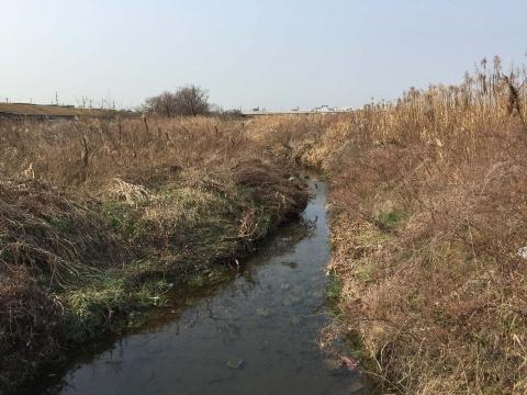 八ヶ村用水から下流側(4)