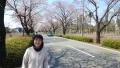 五分咲き桜とNyao