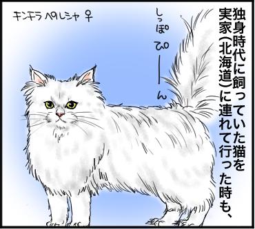 ネコのしっぽ3